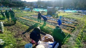 allotment-jan-19-2