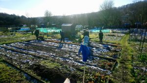 allotment-jan-19
