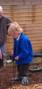 allotment-club-planting-potatos