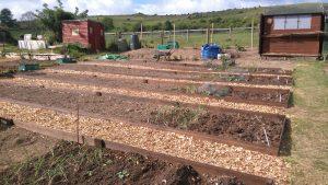 allotment-club-planting-080517